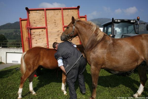 http://romanoriedo.ch/files/gimgs/19_chevaux9916.jpg