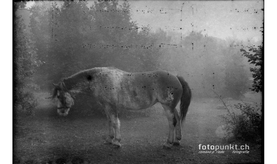 http://romanoriedo.ch/files/gimgs/6_pferd-flou-old-film-s.jpg